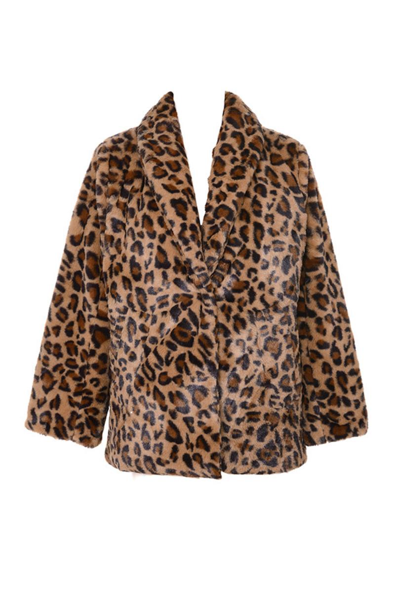novice leopard